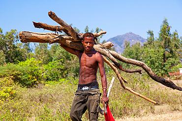 Madagascar carries firewood, near Tulear, Madagascar, Africa