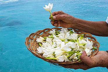 Tiare flowers are presented to passengers on the Aranui 5 (Aranui Cruises) passenger cargo ship, Rotoava, Fakarava Atoll, Tuamotu Islands, French Polynesia, South Pacific