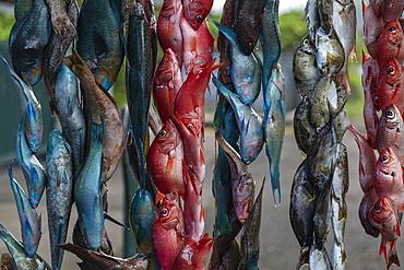Colorful fish hang for sale at a street stall, near Taravao, Tahiti, Windward Islands, French Polynesia, South Pacific