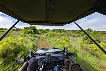 Blurred motion when looking from a safari vehicle operated by luxury resort tented Magashi Camp (Wilderness Safaris), Akagera National Park, Eastern Province, Rwanda, Africa