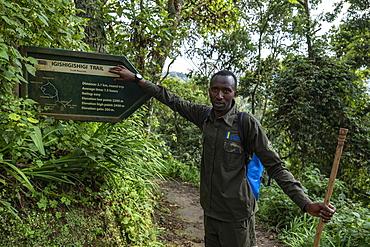 Ranger guide next to signpost on Igishigishigi Trail on the way to Canopy Walkway, Nyungwe Forest National Park, Western Province, Rwanda, Africa