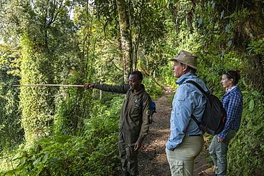 Ranger guide explains the nature to a couple along the Igishigishigi Trail on the way to the Canopy Walkway, Nyungwe Forest National Park, Western Province, Rwanda, Africa