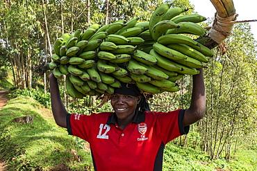 Smiling woman in Arsenal soccer jersey carries heavy banana tree on head, near Gisakura, Western Province, Rwanda, Africa