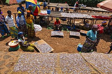 Women dry sambaza fish caught by singing fishermen on Lake Kivu at a roadside market, near Kagano, Western Province, Rwanda, Africa