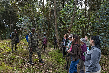 Ranger guides and visitors during a trekking excursion to the Sabyinyo group of gorillas, Volcanoes National Park, Northern Province, Rwanda, Africa