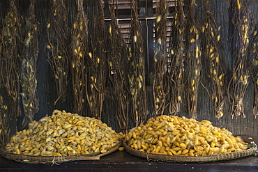 Silk cocoons in a silk factory, Oknha Tey Island, Mekong River, near Phnom Penh, Cambodia, Asia