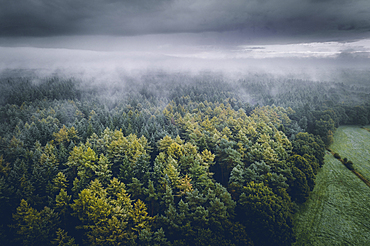 Forest and field under fog and clouds, aerial view, Wiesede, Friedeburg, Wittmund, East Frisia, Lower Saxony, Germany, Europe