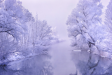 Winter morning on the Loisach, Kochel am See, Upper Bavaria, Bavaria, Germany, Europe