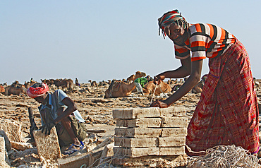 Ethiopia; Afar region; Danakil Desert; Danakil Depression; Workers on the salt pans; loosening and processing the salt plates in laborious manual work; mostly in oppressive heat; Salt plates are tied into packages for transport