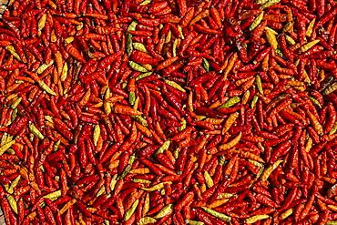 Hot red chillies drying in the sun at the street market, Luang Prabang, Luang Prabang Province, Laos, Asia