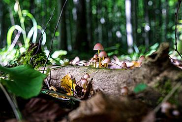Mushrooms, Masurian Lakes, Wegorzewo, Poland