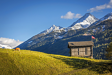 Cow pasture and hut in the Virgental near Obermauern, East Tyrol, Tyrol, Austria