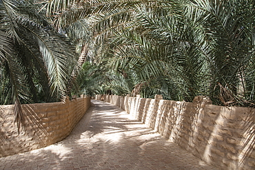Date palm lined path in Al Ain Oasis, Al Ain, Abu Dhabi, United Arab Emirates, Middle East