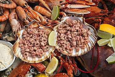 A delicious seafood platter, prepared by chef Boy Schuiling from restaurant 't Paakhuus Texel, is served on board the 1902 sailing ship Iselmar during the Wadden Sea crossing from Harlingen to Terschelling, West Frisian Islands, Friesland, Netherlands