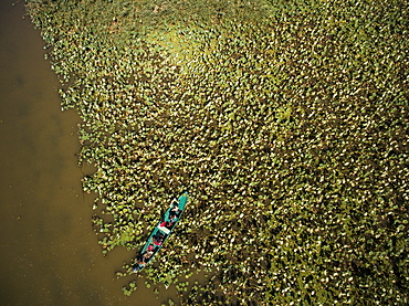 Aerial view of motorboat excursion to wetlands in the Volga Delta with water lilies, near Karalat, Ostrakhan District, Russia, Europe