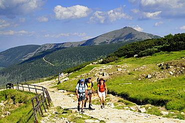 Hikers on a sunlit hiking trail in front of the Schneekoppe, Bohemian mountains, Lower Silesia, Poland, Europe