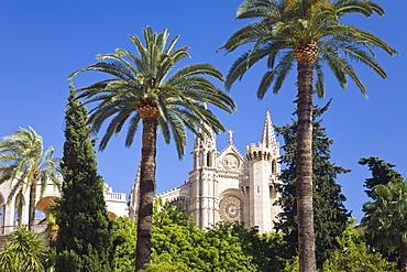 Palm trees and the cathedral La Seu under blue sky, Palme, Mallorca, Spain, Europe