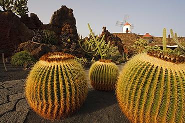 Windmill and cacti, botanical garden, Jardin de Cactus, artist and architect Cesar Manrique, Guatiza, UNESCO Biosphere Reserve, Lanzarote, Canary Islands, Spain, Europe