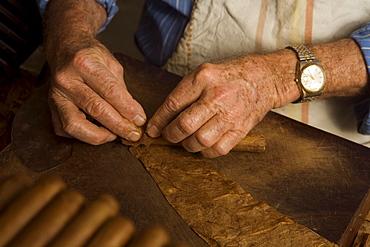 Man, Eusebio Martin, producting cigars, tobacco, workshop, Cigarros Artesanos, Finca Tabaquera El Sitio S.L., Brena Alta, La Palma, Canary Islands, Spain, Europe