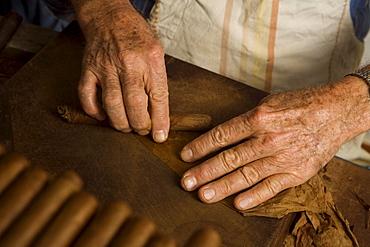 Man, Eusebio Martin producing cigars, tobacco, in a workshop, Cigarros Artesanos, Finca Tabaquera El Sitio S.L., Brena Alta, La Palma, Canary Islands, Spain, Europe