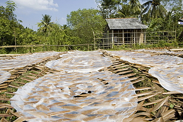 Rice paper production, rice paper drying up in the sunlight, Mekong Delta, Can Tho Province, Vietnam, Asia