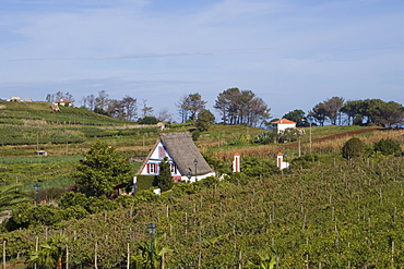 Traditional Madeiran A-Framed Palheiro house with straw roof in Quinta do Furao Hotel Vineyard, Santana, Madeira, Portugal
