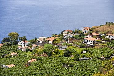 Houses amidst a banana plantation, Madalena do Mar, Madeira, Portugal