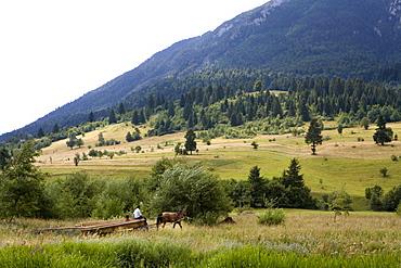 Gypsies on a horse-drawn carriage on the foot of the Piatra Craiuli Mountain range, Transylvania, Carpathian Mountains, Romania, Europe