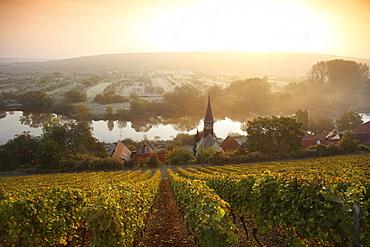 View over vineyards Volkach-Koehler, Franconia, Bavaria, Germany