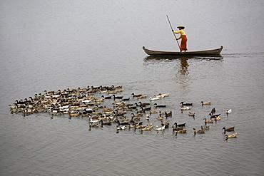 Women in a canoe with simming ducks on the Taungthaman Lake in Amarapura near Mandalay, Myanmar, Burma