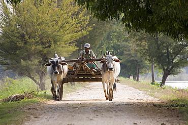 Farmer on a cart with team of oxen on Inwa island ( Ava ) at Ayeyarwady River near Amarapura, Myanmar, Burma