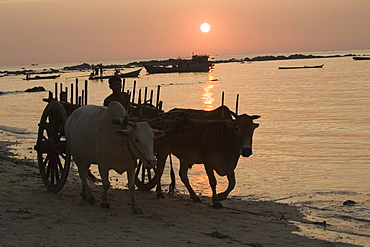 Man on an oxen cart at sunset in Ngapali Beach, Gulf of Bengal, Rakhine State, Myanmar, Burma