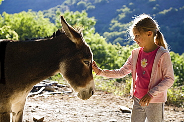 girl is caressing a donkey, family-hiking with a donkey in the Cevennes mountains, France, Europe