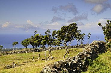 Landscape beneath the Vulcano, Pico Island, Azores, Portugal