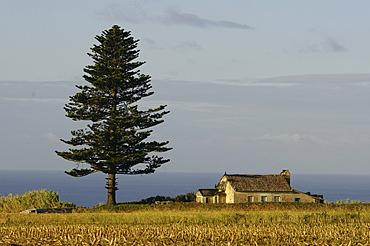 Landscape near Lagoa, Southeastcoast, Sao Miguel Island, Azores, Portugal