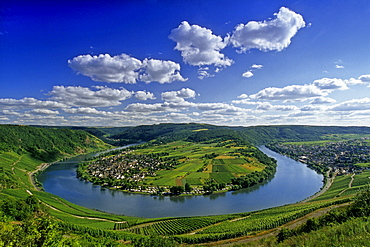 View from the vineyards to Mosel sinuosity near Kroev, Mosel, Rheinland-Palatinate, Germany