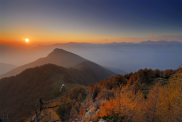 Larches in autumn colours in evening light, Monte Legnone, Bergamo Alps, Como, Lombardy, Italy