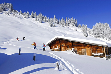 Backcounty skiiers near alpine hut, Wiedersberger Horn, Kitzbuehel Alps, Tyrol, Austria