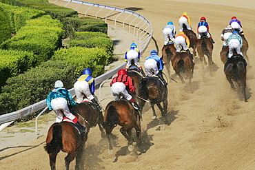 Jockeys riding race horses at a horse race, Nicosia, Lefkosia, South Cyprus, Cyprus
