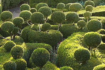 Les Jardins de Marqueyssac in the evening light, near Beynac, The wy of St. James, Road to Santiago, Chemins de Saint-Jacques, Via Lemovicensis, Beynac, Dept. Dordogne, Région Aquitaine, France, Europe