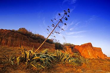 Barren landscape under blue sky at the rocky coast Praia da Falesia, Algarve, Portugal, Europe