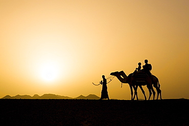 A man, a bedouin leading two camels with tourists, a mother and two children at sunset, Marsa Alam desert, Red Sea, Egypt