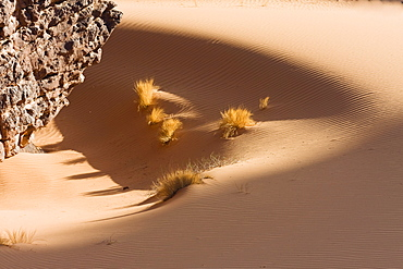 Sandformation with grass and rocks in the libyan desert, Akakus mountains, Sahara, Libya, North Africa