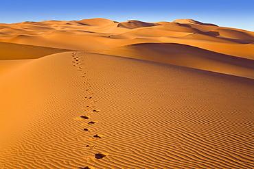 Footprints in the libyan desert, Libya, Sahara, North Africa