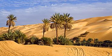 Um el Ma oasis and sanddunes, libyan desert, Libya, Sahara, Africa