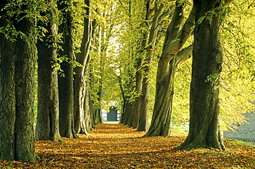 Chestnut alley, Muensterland, North Rhine-Westphalia, Germany