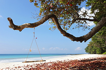 Swing at the edge of the coastal forest of Radha Nagar Beach with a view of the Andaman Sea, Beach 7, Havelock Island, Andamans, India