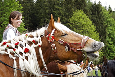 Roses woven into a horse's mane, traditional Georgiritt at Hub-chapel, Penzberg, Upper Bavaria, Germany