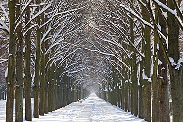 Herrenhaeuser Allee in the winter snow, avenue of lime trees, Georgen Garten, Hanover, Lower Saxony, Germany