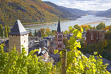 View at Bacharach with Vineyard and Werner chapel, River Rhine, Cultural Heritage of the World: Oberes Mittelrheintal (since 2002), Mittelrhein, Rhineland-Palatinate, Germany, Europe
